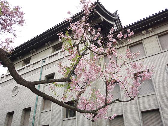 Sakura 06991