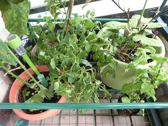 greenhouse160107_02
