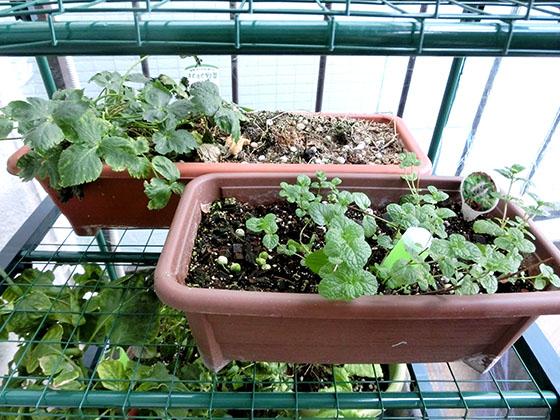 greenhouse160107_05
