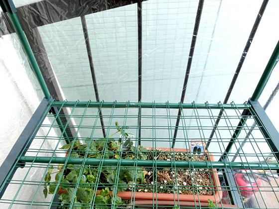 greenhouse160107_06